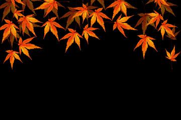 秋 紅葉 イメージ