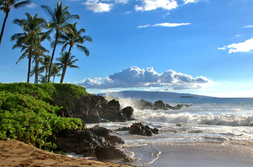 Tropical Hawaiian beach with palm trees, Maui, Hawaii, USA