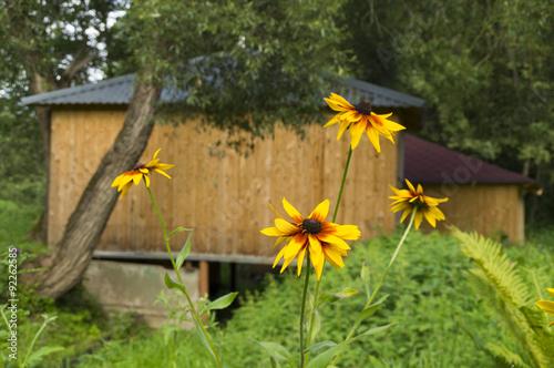 Желтые цветы в лесу и названия 50