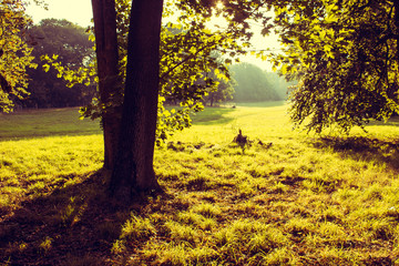 Meadow with Tree in the Morning