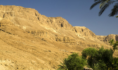 Oasis in Judean desert