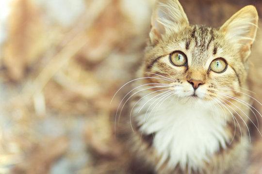 Autumn portrait of cute kitty
