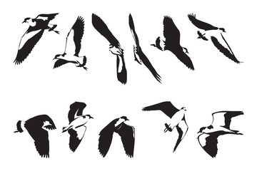 Flying Masked Lapwing Silhouettes Set