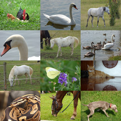 Set of 12 animals photos