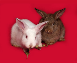 Two rabbits, brown and white, sitting on red