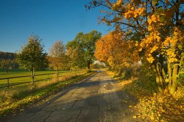 jesień z drogą