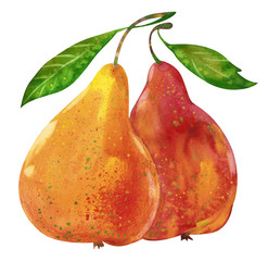Watercolor tasty pears hand drawn illustration