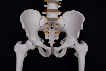 Pelvis and Femoroacetabular Joint