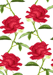 Beautiful seamless background with pink roses with stem and leaves on white background.