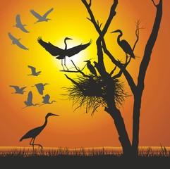 Group herons at sunset