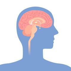 human brain structure, image illustration