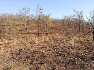 In some parts of Zambia - as in this rural Lusaka, Zambia, photo -trees and other vegetation are not given chance to grow to big sizes as a result of burning and cutting down for charcoal.