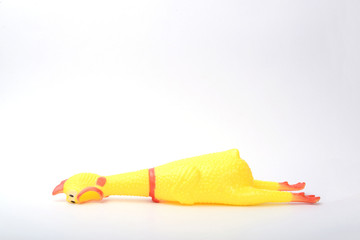 toy rubber chicken on white background