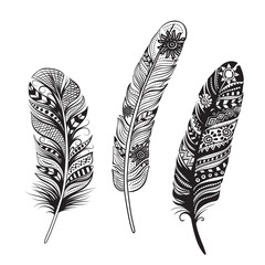 Feathers of birds. Vector illustration.