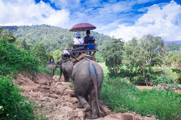 Group tourists to ride on an elephant in forest Chiang mai, Thailand