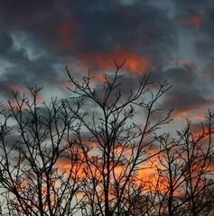 """""""tramonto invernale con albero"""""""