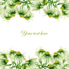Template of postcard, frame border with green camomiles painted in watercolor on a white background, decoration postcard, greeting card or invitation
