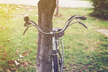 vintage bicycle and tree in garden