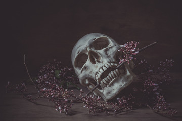 Still life photography with a human skull and branch of  flower