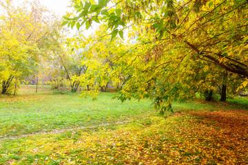 Fall foliage branches day sun