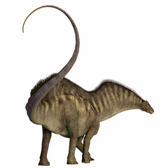 Amargasaurus Dinosaur Tail - Amargasaurus was a herbivorous sauropod dinosaur that lived in Argentina during the Cretaceous Era.