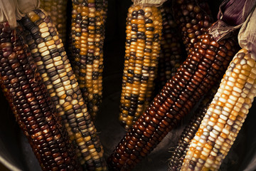Dried Indian Corn