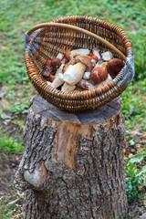 Fresh mushrooms in basket