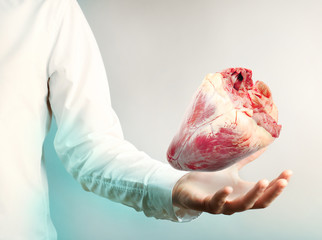 Medical concept. Female doctor with real heart in hands.