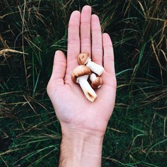 mushrooms on the hand in the forest