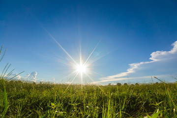 Fototapete - sun rays with blue sky background