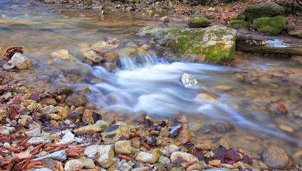 Forest creek at autumn