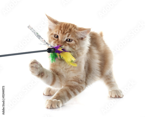 Redirected aggression in cats