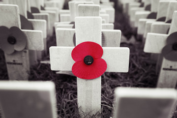Poppy Cross, Remembrance day display