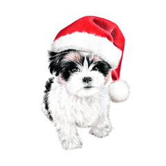 hand drawn puppy dog with santa claus hat, cute fun Christmas card clipart, sketch of dog is colored pencil drawing, holiday clip art illustration isolated on white background
