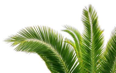 Photo sur cadre textile Palmier Feuilles de palmier