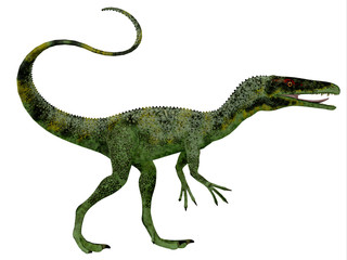 Juravenator Dinosaur Profile - Juravenator was a small carnivorous dinosaur that lived in Germany during the Jurassic Period.