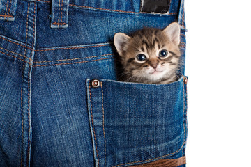Small kitten sitting in a pocket of blue jeans. Isolated. A series of photos.