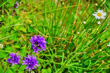 a beetle on a purple flower