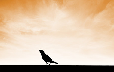 silhouette bird on ground with sunset sky