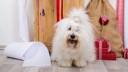 bilder und videos suchen baumwollhund. Black Bedroom Furniture Sets. Home Design Ideas