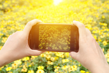hand holding  smartphone and flower field