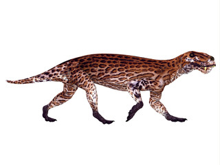 Lycaenops Permian Dinosaur - Lycaenops was a carnivorous mammal-like reptile that lived in South Africa during the Permian Period.