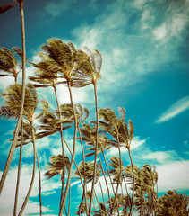 Retro Palm Trees In The Wind