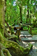 Wooden bridge in tropical rain forest, taken at Doi Inthanon Nat