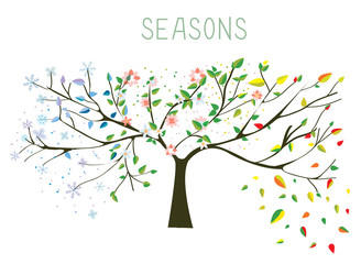 Tree during four seasons concept