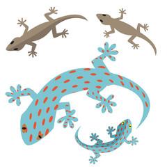 Home lizard and gecko lizard in flat