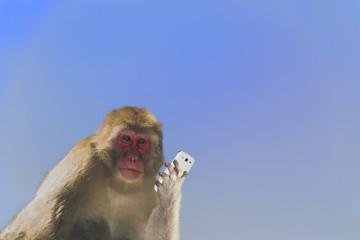 スマートフォンを持つ日本猿