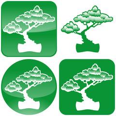 Stylized Bonsai tree icon.