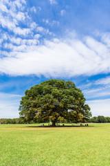 青空とケヤキの木