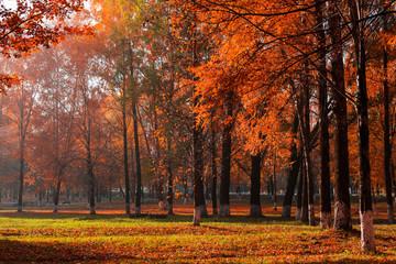 Garden Poster sunny autumn landscape
